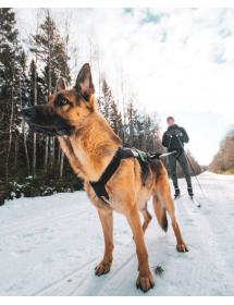 Harnais Non Stop Freemotion Alpin'Dog Sport Canin
