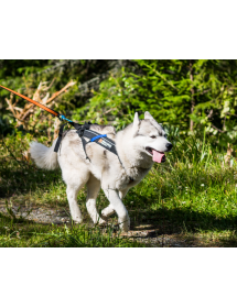 Harnais Non Stop Freemotion Alpin'Dog Traction