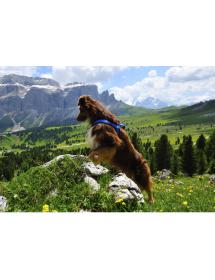 Harnais Neewa d'activité Bleu Alpin'Dog Ballade
