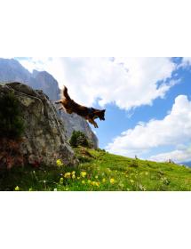 Harnais Neewa d'activité Rouge Alpin'Dog Randonnée
