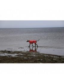 Parka Rukka Pets Hike Air Saumon Alpin'Dog Promenade