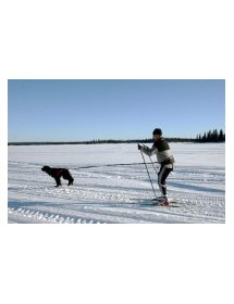 Baudrier Baggen Race X2 Alpin'Dog Canicross Skijöering