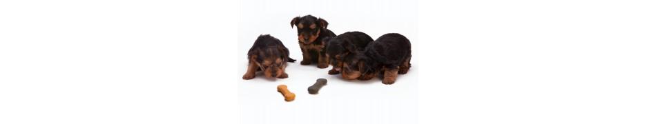 Croquettes pour chiens Happydog